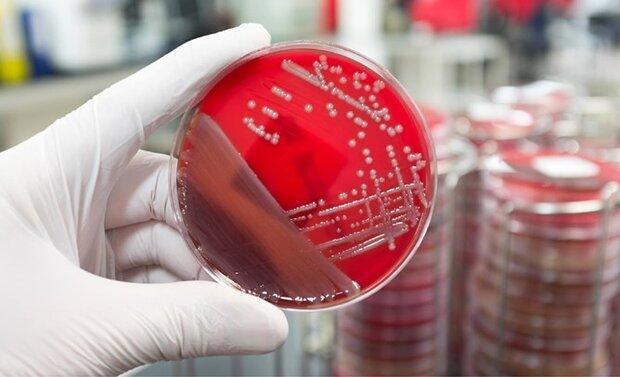 نگهداری بیش از 4هزار سویه میکروارگانیسم، ایجاد کلکسیون پروبیوتیکی