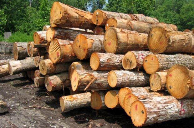 طرح جایگزین جنگلداری با رویکرد برداشت چوب تدوین نمی شود