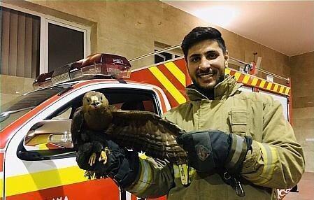 فرود عقاب در حیاط خانه ای در بلوار ارتش