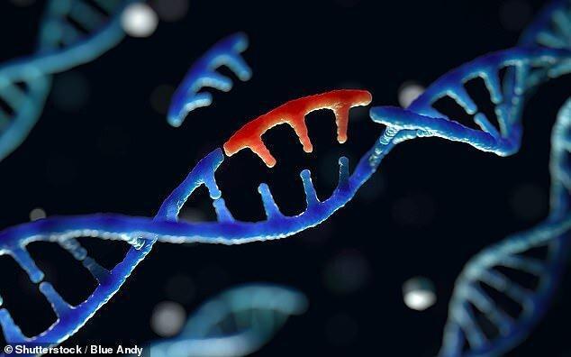 ژاپن کاشتن رویان های تغییریافته ژنتیکی را ممنوع می کند