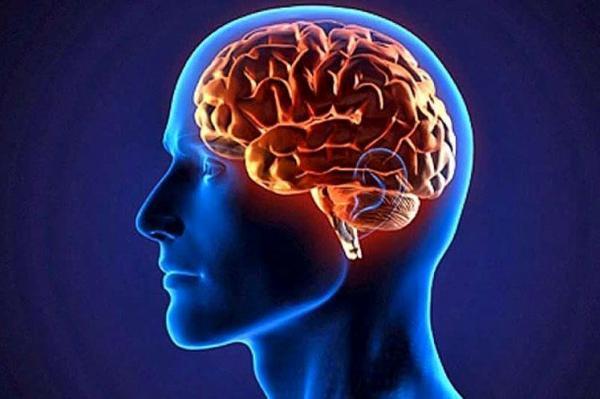 سه ماده غذایی خطرناک برای مغز انسان