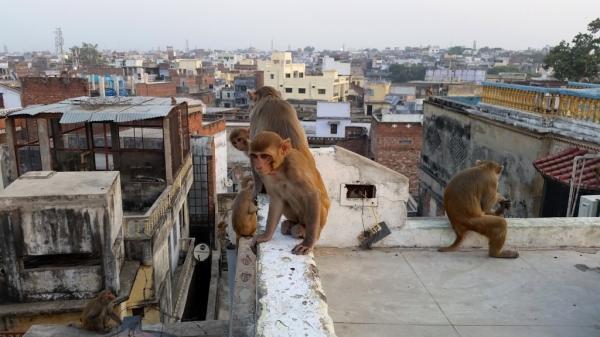 زیباترین شهر های هندوستان